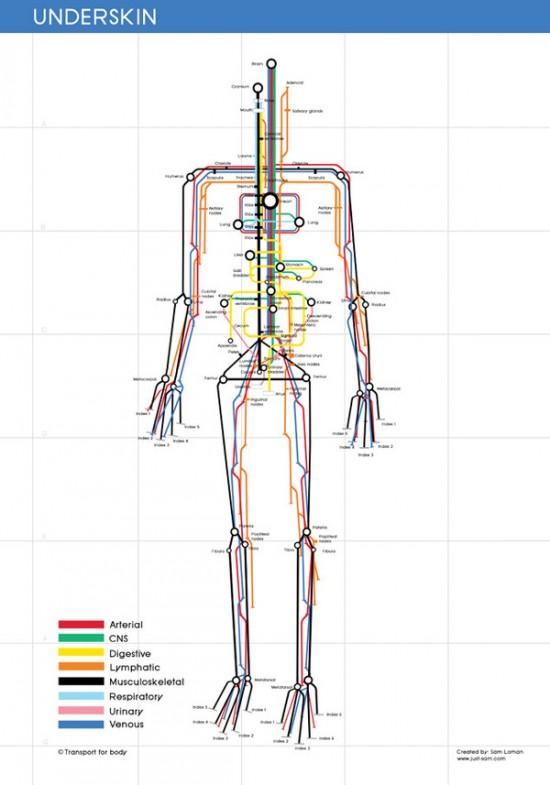 Строение человеческого тела