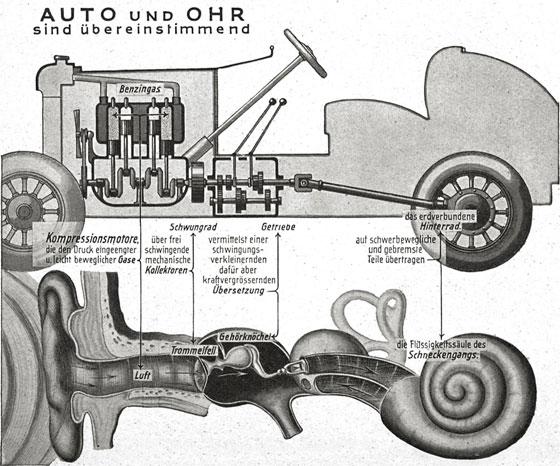 Сравнение устройства уха с автомобилем